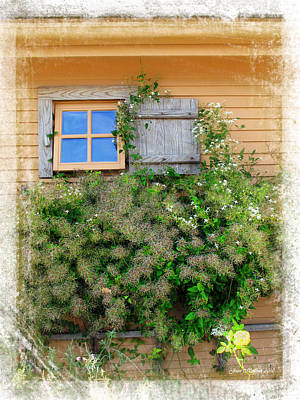 Photograph - Window Floral In Plymouth by Joan  Minchak