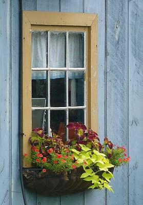 Window Flower Basket Art Print