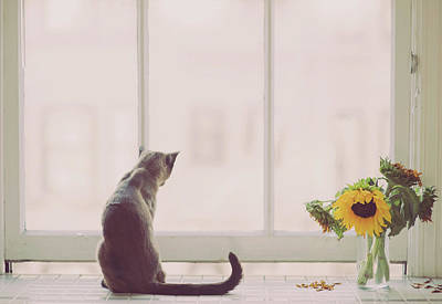 Pets Photograph - Window In Summer by Cindy Loughridge