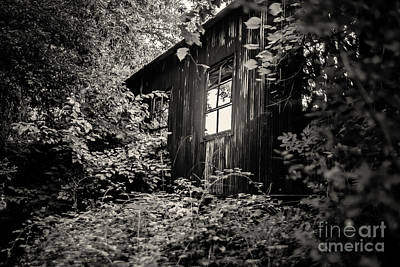 Photograph - Window In The Woods by Randall  Cogle