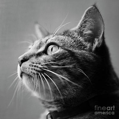 Photograph - Window Kitten by Patrick M Lynch