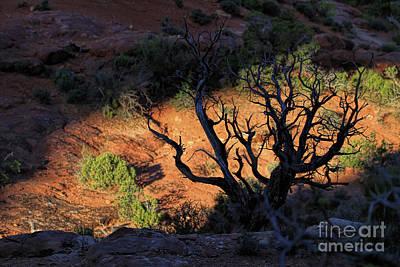 Photograph - Window Light by Jim Garrison