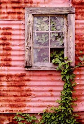 Window Of Ivy Art Print