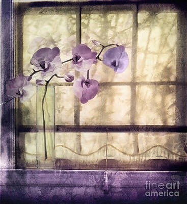 Nostalgia Painting - Window Orchids by Mindy Sommers