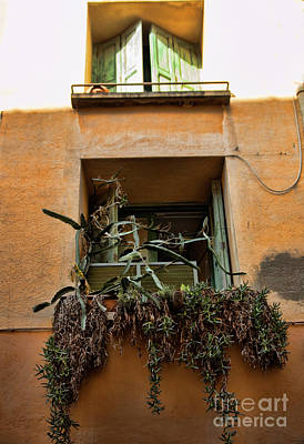Photograph - Window Plants Collioure France  by Chuck Kuhn