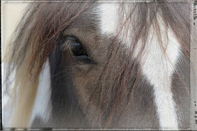 Photograph - Window To A Horse's Soul by Mick Anderson