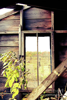 Nikki Vig Royalty-Free and Rights-Managed Images - Window to Autumn by Nikki Vig