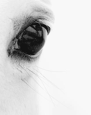 Horse Eye Photograph - Window To The Soul by Ron  McGinnis