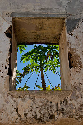 Photograph - Window Tree by Roger Mullenhour