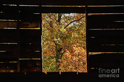 Photograph - Window View by John Greco