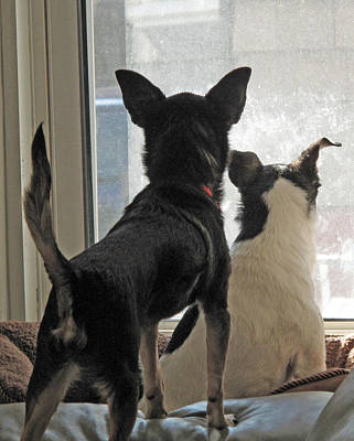 Photograph - Window Watch Dogs by Barbara McDevitt