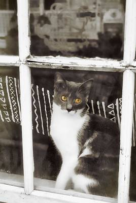 Photograph - Window Watcher by JAMART Photography
