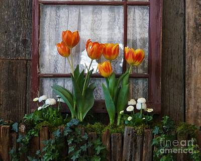 Photograph - Windowbox Tulips by Patricia Strand