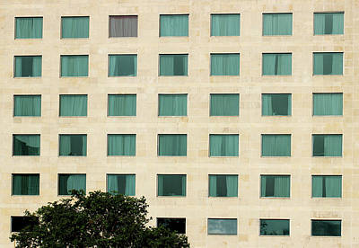 Photograph - Windows And The Tree by Prakash Ghai
