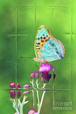 Royalty-Free and Rights-Managed Images - Windows on Nature - Butterfly by Esoterica Art Agency