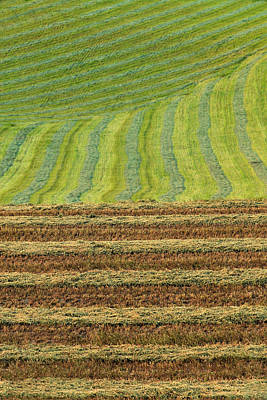 Photograph - Windrows by David Andersen
