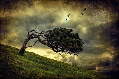 Bent Photograph - Winds Of Change by Peter Elgar