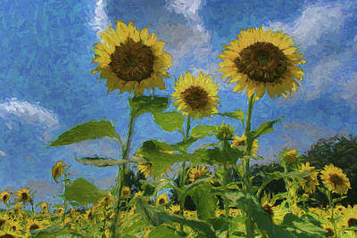 Photograph - Windsor Castle Sunflowers by Jerry Gammon