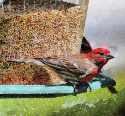 Windsor House Finch Art Print