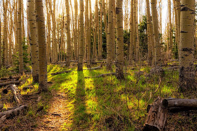 Photograph - Windsor Trail At Dusk - Santa Fe National Forest New Mexico by Brian Harig