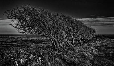 Greenman Photograph - Windswept. An Atmospheric Fine Art Photographic Print Of Gnarled And Windswept Hawthorn Trees.       by Lee Thornberry