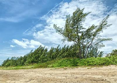 Photograph - Windswept Beach by John M Bailey