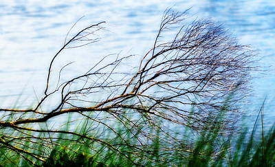 Photograph - Windswept Branch At Water's Edge At St. Marks by Carla Parris