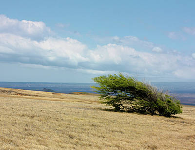 Photograph - Windswept by Bruce