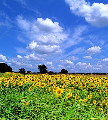 Windswept Field And Sky Art Print