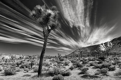 Mojave Photograph - Windswept by Joseph Smith