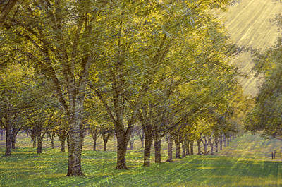 Photograph - Windswept Orchard by Jan Amiss Photography