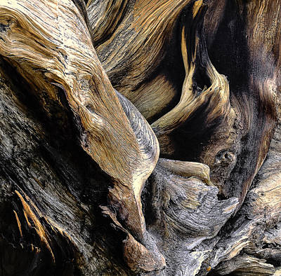 Windswept Roots Art Print by The Forests Edge Photography - Diane Sandoval