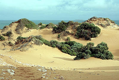Photograph - Windswept Sand Dunes by Fran West