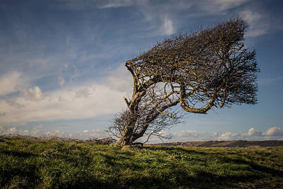 Photograph - Windswept by Stewart Scott