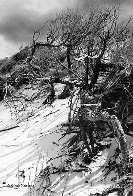 Black_white Photograph - Windswept Trees  by Gerlinde Keating - Galleria GK Keating Associates Inc