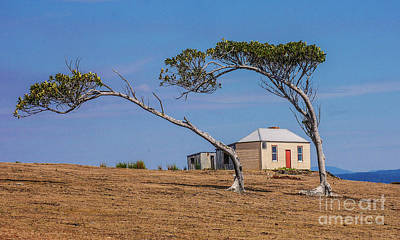 Photograph - Windswept Trees Maria Island by Lexa Harpell