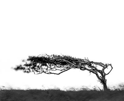 Photograph - Windswept  by Will Gudgeon