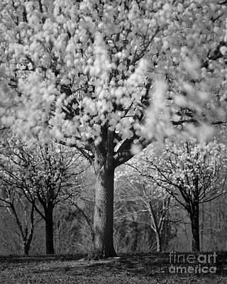 Photograph - Windy Day Bradford by Patrick M Lynch