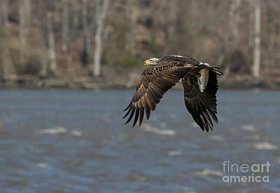 Photograph - Windy Day Snack by Art Cole