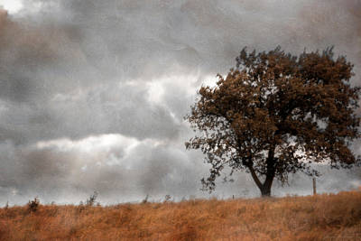 Photograph - Windy Day by Yvonne Emerson AKA RavenSoul