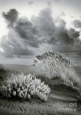 Photograph - Windy Dunes At Sunrise by Dan Carmichael