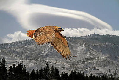 Red Tail Hawks Photograph - Windy Flight by Donna Kennedy