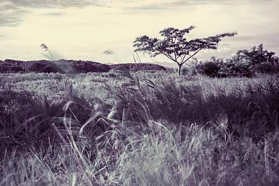 Photograph - Windy Grassland 2 by Roy Cruz