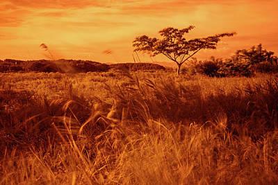 Photograph - Windy Grassland 3 by Roy Cruz