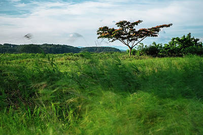 Photograph - Windy Grassland by Roy Cruz