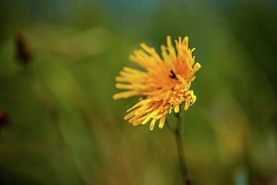 Photograph - Windy Hair #g7 by Leif Sohlman