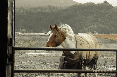 Photograph - Windy In Mane by Clayton Bruster