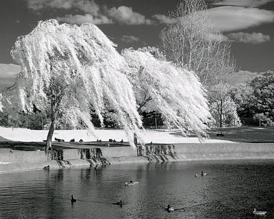 Willow Lake Photograph - Windy Lace by Lynn Andrews