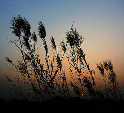 Photograph - Windy Sunset by Atullya N Srivastava