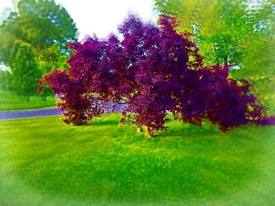 Photograph - Wine Colored Bush by Skyler Tipton